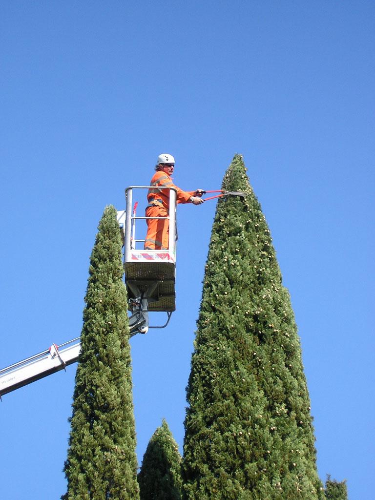 treeclimbing2