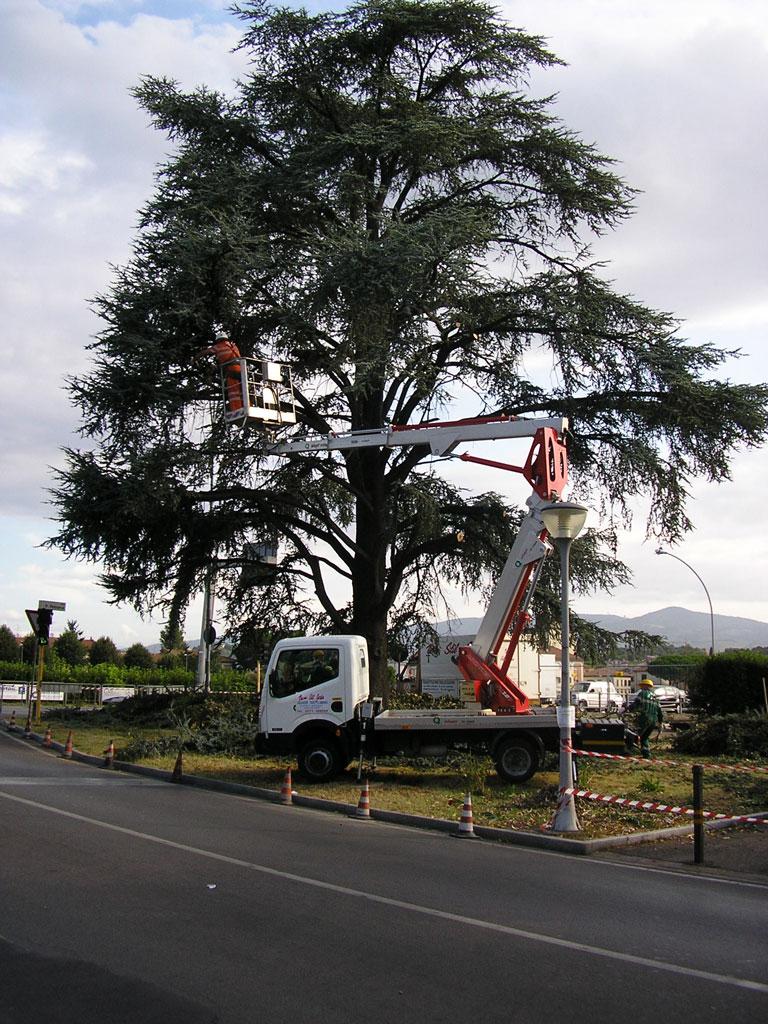 treeclimbing3